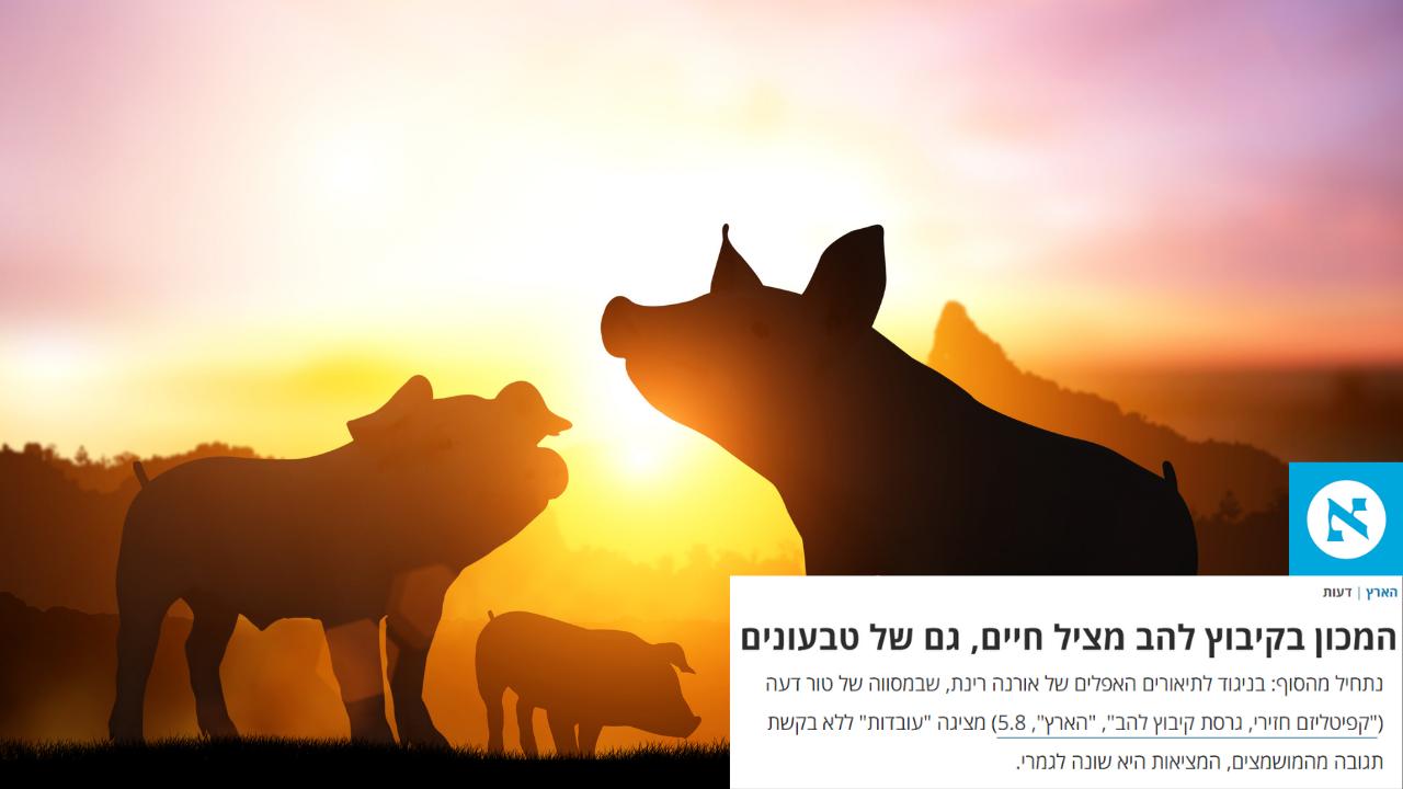 קיבוץ להב חזירים - עיתון הארץ